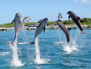 delfines cancun isla mujeres