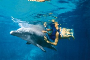 delfin09